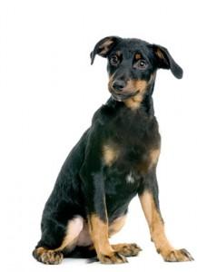 Dog training puppies
