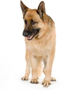 The Dog Listener erthod