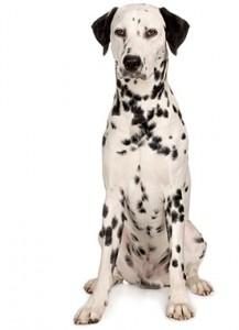 Dog behaviour questions