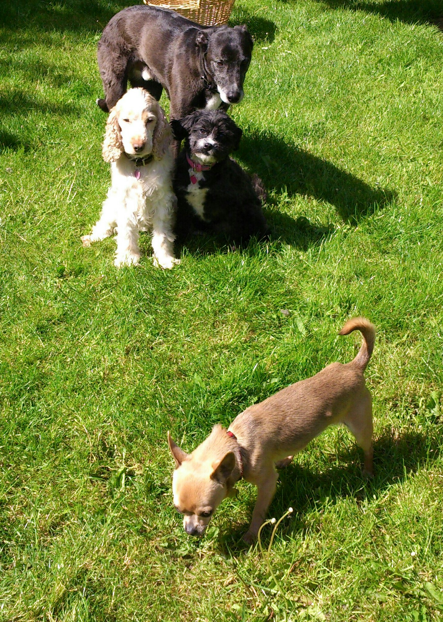 Fear of other dogs - dog training norwich