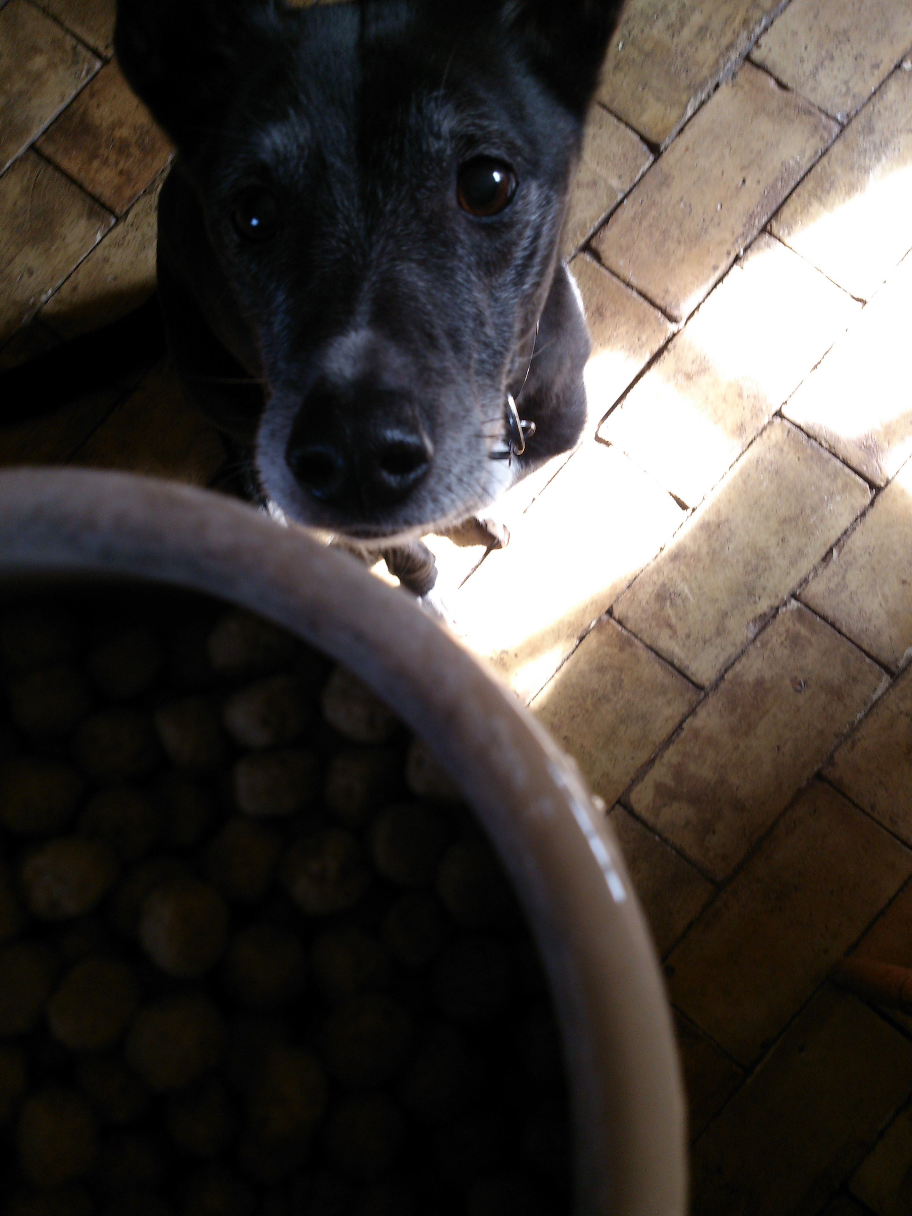 To avoid problems around food, dogs should be fed when they are calm. Dog's leaving food, are stressed dogs!!