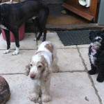 Dog Trainer Norfolk - Dogs and cat problems