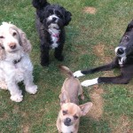 Dog Trainer Norfolk