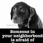 Dogs frightened fireworks Norwich,Norfolk